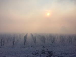 la Croix Mélier - vignes sous la neige