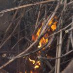 Sarments de vigne en feu