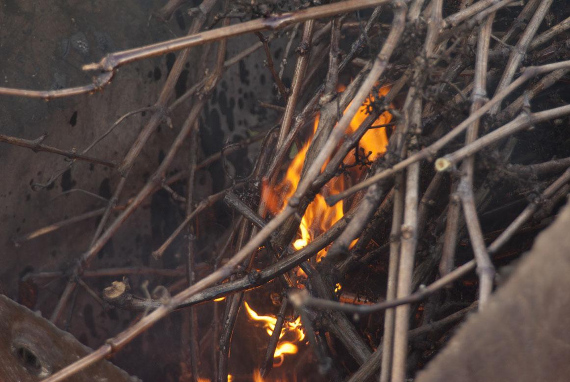 Brûlage des sarments de vigne