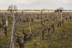 Domaine La Croix Mélier - Montlouis - Vignes après la taille