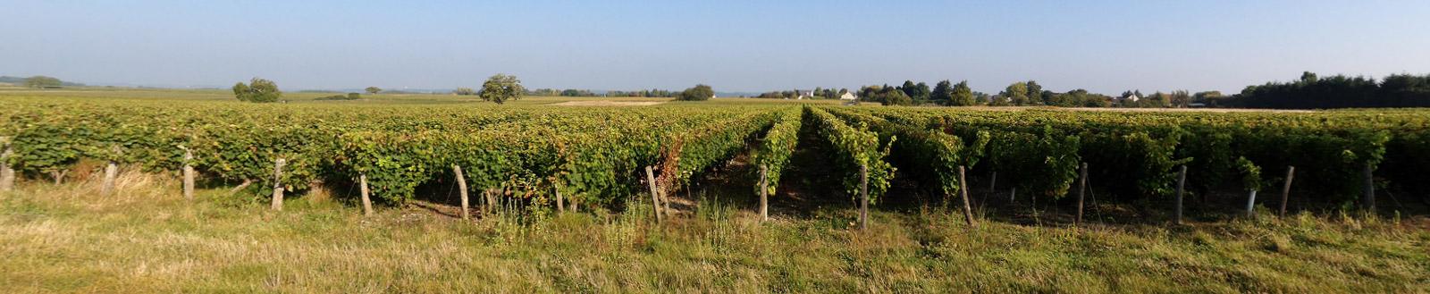 Vignes Domaine La Croix Mélier